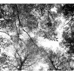 モノクロ写真zine 『シンクウカン vol.2』